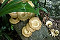 Perhentian Besar, Malaysia, Mushrooms, Wood.jpg