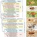 Pholcidae (10.3897-zookeys.789.22781) Figure 7.jpg