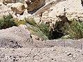 PikiWiki Israel 16119 Ein gedi.JPG
