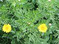 PikiWiki Israel 29741 Winter Blossom.JPG