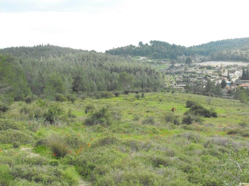 File:PikiWiki Israel 7294 Plants of Israel.jpg