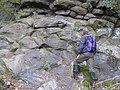 Pillow Lava SSSI Chipley Quarry - geograph.org.uk - 1187275.jpg
