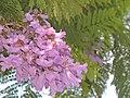Pinkish flowers.jpg
