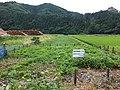 Planned site for new railway line of Uetu main line between Koiwagawa and Atumi-onsen.jpg