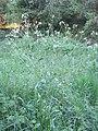 Plante C2.jpg