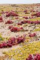Plants & Lichen (3690935409).jpg