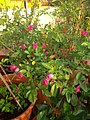 Plants at Bijalinagar 90.jpg