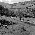 Powys in Spring (16545519719).jpg