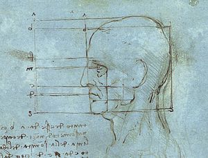 Study of the proportions of the head.