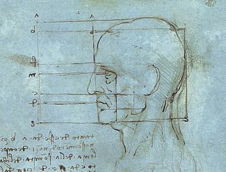 Human head - The human head drawn by Leonardo da Vinci
