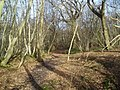 Public Footpath through Hugglets Wood - geograph.org.uk - 333095.jpg