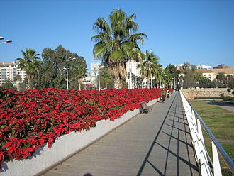 Climate of Valencia - Winter in Valencia: very mild temperatures and mostly green flora.