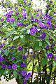 PurpleFlowerEncarnacion.jpg