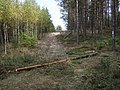 Puszcza Bydgoska - panoramio (7).jpg