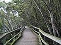 QUT Boardwalk through the mangroves IMG 6818 (2056679120).jpg
