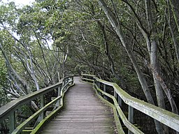 QUT Boardwalk through the mangroves IMG 6818 (2056679120).jpg