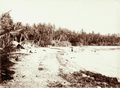Queensland State Archives 2532 Darnley Island court house in coconut palm setting 1898.png