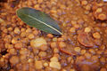Quick Lentils with Chorizo (7017166123).jpg
