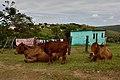 Qunu, Eastern Cape, South Africa (20485587956).jpg