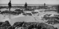Récif d'Hermelles de la baie du Mont-Saint-Michel.png