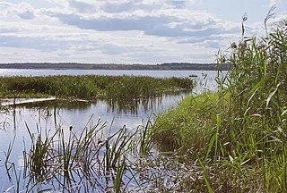 Võrtsjärv Lake in Estonia