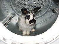 Rabbit in the Dryer