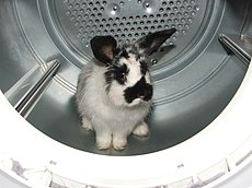 Rabbit in the Dryer.jpg