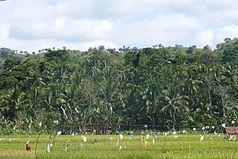 Blick auf die Hügel des Rajah Sikatuna Protected Landscape