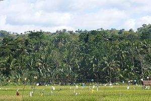 Rajah Sikatuna Protected Landscape - Image: Rajah Sikatuna Protected Landscape