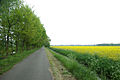 Rapsfelder bei Drehnow 0042.jpg