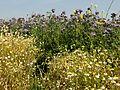 Ravenel (60), chemin du Plessier 6.jpg