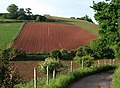 Red Devon field, Haccombe - geograph.org.uk - 825371.jpg