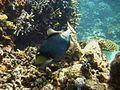 Reef2166 - Flickr - NOAA Photo Library.jpg