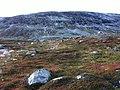 Reinsdyr på Strynefjellet.jpg