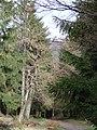 Rennsteig zur Grenzwiese - panoramio.jpg