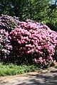 Rhododendronpark Bremen 20090513 112.JPG