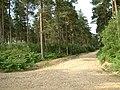 Ringwood Forest - geograph.org.uk - 21322.jpg