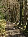 Riverside bridleway - geograph.org.uk - 1199993.jpg