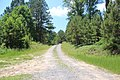 Road in Pine Log WMA, Bartow County, GA May 2019.jpg