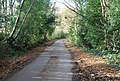Road through the woods SE of Tunbridge Wells - geograph.org.uk - 1056525.jpg