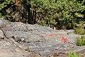 Rock paintings in Naesaaker 07.jpg