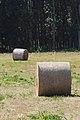 Rolo de herba - Rollo de hierba - Round hay bale - 01.jpg