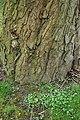 Rombergpark-100330-11397-Stamm.jpg
