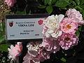 RosaCultivarVirnaLisi-RosetoRoma.JPG