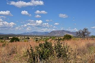 Southern acacia–commiphora bushlands and thickets