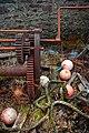 Rusted winching gear behind boathouse, Kilfinan Bay, Loch Fyne - geograph.org.uk - 1513839.jpg