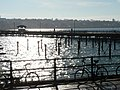 Ryde, the pier against the sun - geograph.org.uk - 684040.jpg