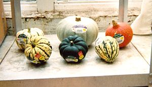 Food marketing - Squashes and a pumpkin bought in the UK.