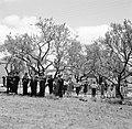 Sardana spelende orkest en dansende mensen op een weide, Bestanddeelnr 254-0859.jpg