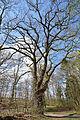 Schleswig-Holstein, Drage, Naturdenkmal 13 NIK 2035.JPG